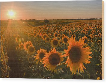 Glowing Sunflowers Wood Print by Scott Bean