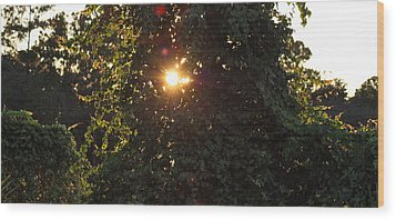 Wood Print featuring the photograph Glowing Tree by Michael Albright