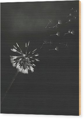 Wood Print featuring the photograph Go Forth Bw by Heather Applegate