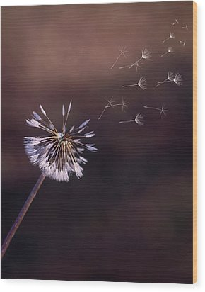 Wood Print featuring the photograph Go Forth Fall by Heather Applegate