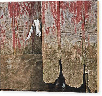 Goat And Old Barn Door Wood Print by Susan Leggett