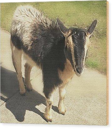 Goat Wood Print by Heather Applegate