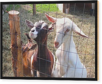 Wood Print featuring the photograph Goats by Felipe Adan Lerma