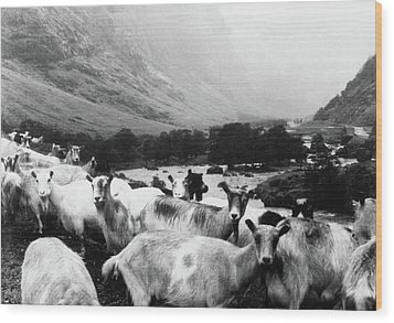 Wood Print featuring the mixed media Goats In Norway- By Linda Woods by Linda Woods