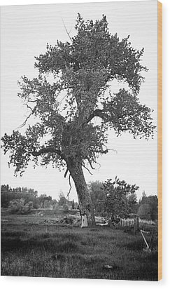 Goddess Tree 2 Wood Print by Matthew Angelo
