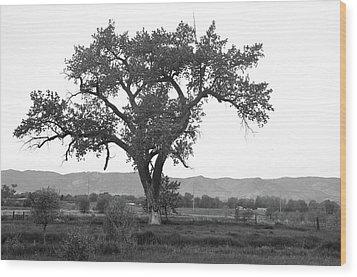 Goddess Tree 3 Wood Print by Matthew Angelo