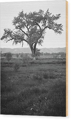 Goddess Tree Wood Print by Matthew Angelo