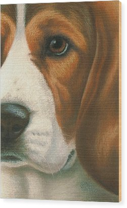 Goggie Beagle Wood Print by Karen Coombes