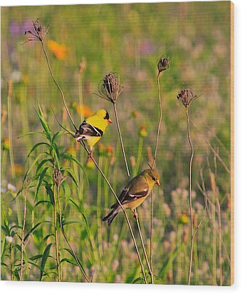 Gold Finches Wood Print by Robert Pearson