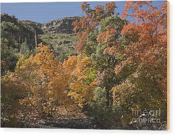 Wood Print featuring the photograph Gold In The Mountains by Melany Sarafis