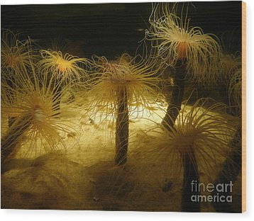 Gold Sea Anemones Wood Print