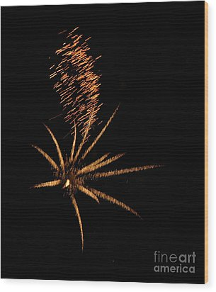 Gold Star Tail Wood Print by Norman Andrus