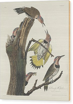 Gold-winged Woodpecker Wood Print by Rob Dreyer