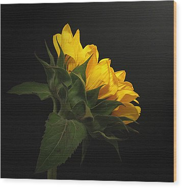 Wood Print featuring the photograph Golden Beauty by Judy Vincent