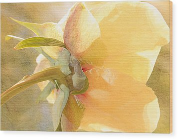 Golden Bowl Tree Peony Bloom - Back Wood Print