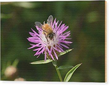 Golden Boy-bee At Work Wood Print by David Porteus