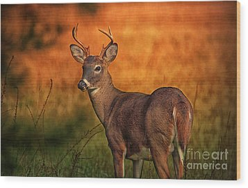 Golden Buck Wood Print