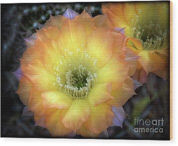 Golden Cactus Bloom Wood Print by Saija  Lehtonen