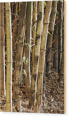 Wood Print featuring the photograph Golden Canes by Linda Lees
