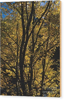 Golden Colors Of Autumn In New England  Wood Print by Erin Paul Donovan