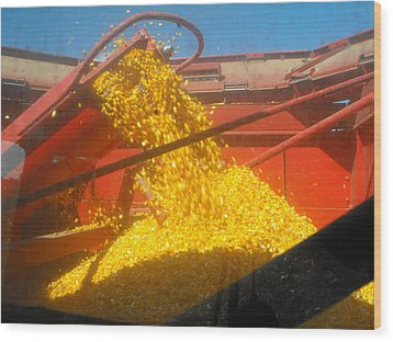 Golden Corn Wood Print