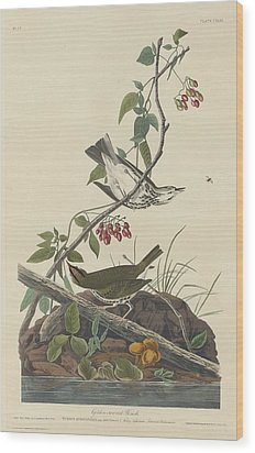 Golden-crowned Thrush Wood Print by Rob Dreyer