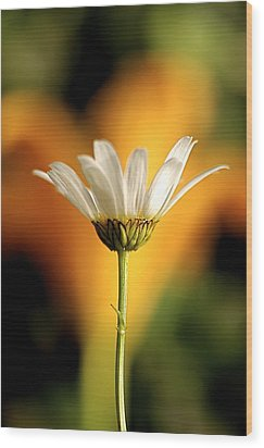 Golden Daisy Wood Print