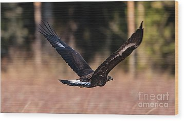 Golden Eagle Flying Wood Print by Torbjorn Swenelius
