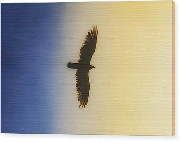 Golden Eagle Over Friday Harbor Wood Print