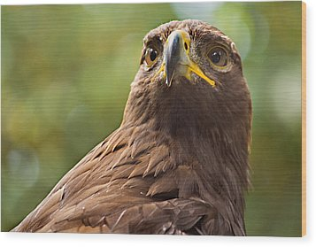 Golden Eagle Portrait Wood Print by Peter J Sucy