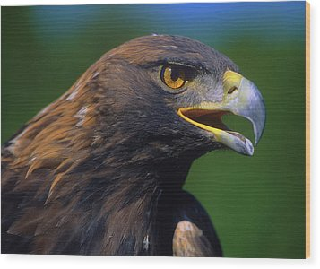 Golden Eagle Wood Print by Tony Beck