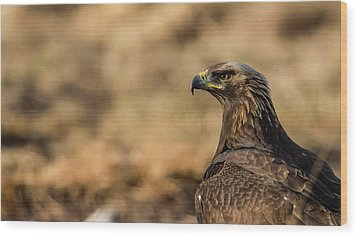 Golden Eagle Wood Print by Torbjorn Swenelius