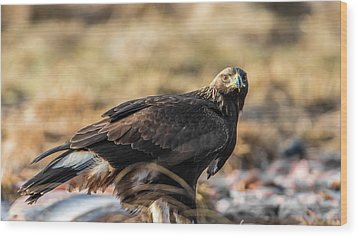 Golden Eagle's Glance Wood Print by Torbjorn Swenelius