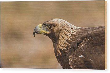 Wood Print featuring the photograph Golden Eagle's Portrait by Torbjorn Swenelius