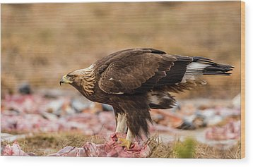 Golden Eagle's Profile Wood Print by Torbjorn Swenelius