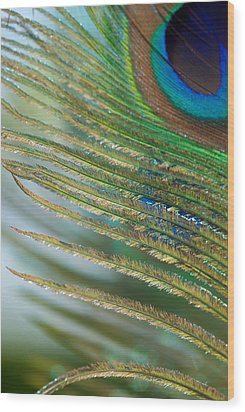Golden Feather Wood Print by Lisa Knechtel