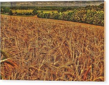 Golden Field In Normandy Wood Print