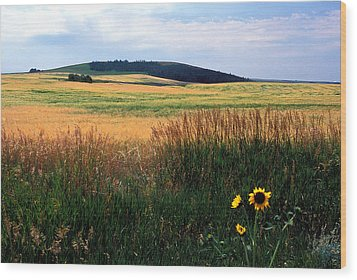 Golden Fields Forever Wood Print by Kathy Yates