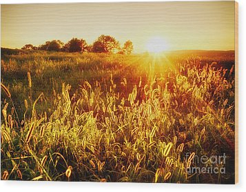 Wood Print featuring the photograph Golden Fields by Mark Miller