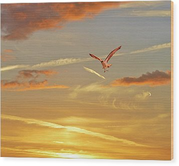 Golden Flight Wood Print by Adele Moscaritolo