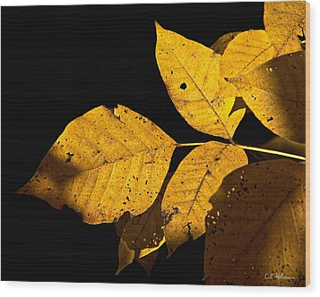 Golden Glow Wood Print by Christopher Holmes