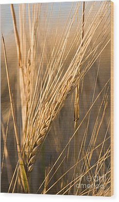 Golden Grain Wood Print by Cindy Singleton