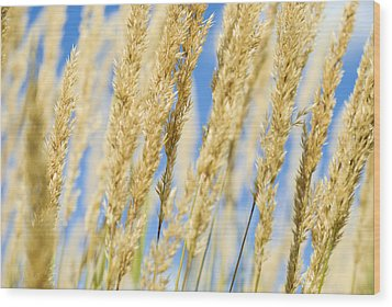 Wood Print featuring the photograph Golden Grains by Christi Kraft