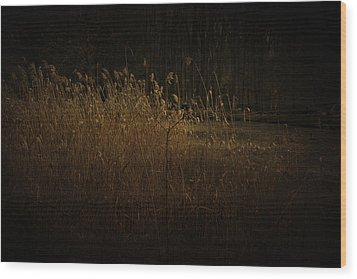 Wood Print featuring the photograph Golden Grass by Ryan Photography