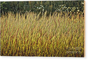 Golden Grasses Wood Print by Meirion Matthias