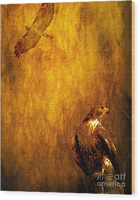 Golden Hawk 4 Wood Print by Wingsdomain Art and Photography