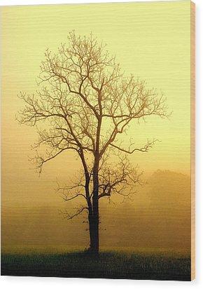 Golden Haze Wood Print by Marty Koch