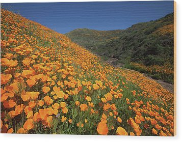 Wood Print featuring the photograph Golden Hillsides by Cliff Wassmann