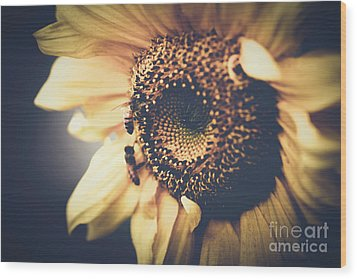 Wood Print featuring the photograph Golden Honey Bees And Sunflower by Sharon Mau