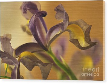 Golden Iris Wood Print by Terri Thompson